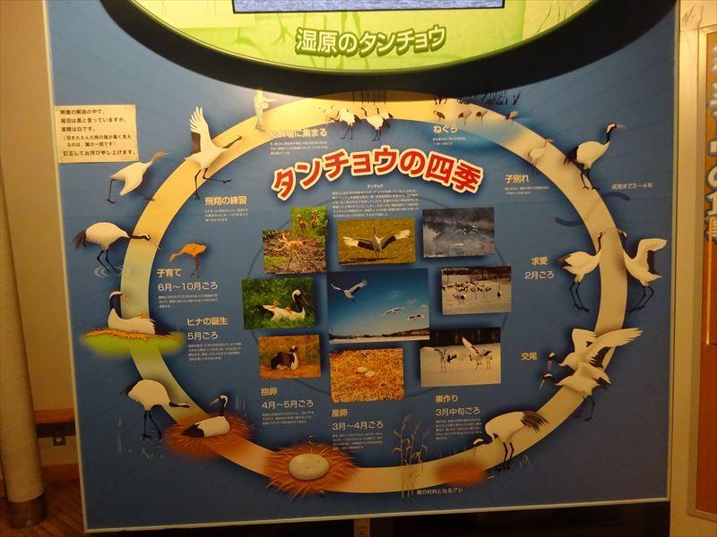 2021北海道6輪車中泊旅10日目(釧路湿原サイクリングと丹頂鶴観察)_e0201281_06372427.jpg