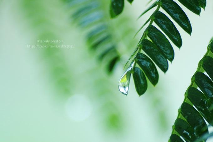 マクロde雫 -合歓の木*Ⅰ-_b0391986_00290176.jpg