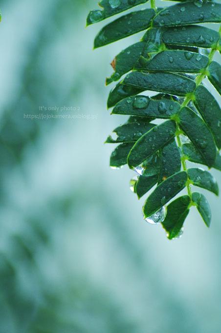 マクロde雫 -合歓の木*Ⅰ-_b0391986_00291503.jpg