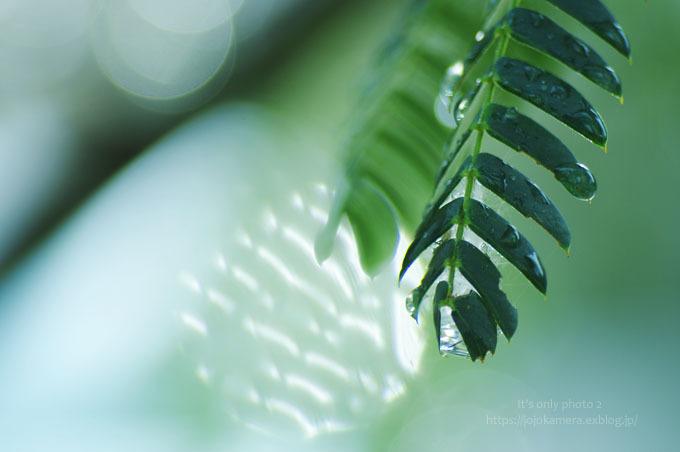 マクロde雫 -合歓の木*Ⅰ-_b0391986_00294990.jpg