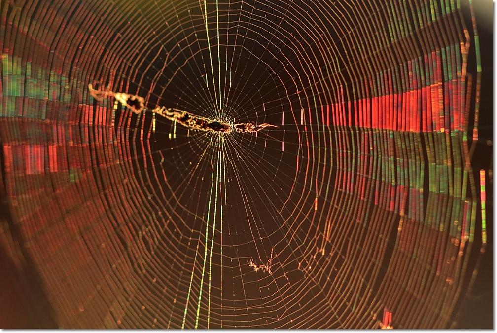 蜘蛛の糸に朝日_a0057905_14000978.jpg