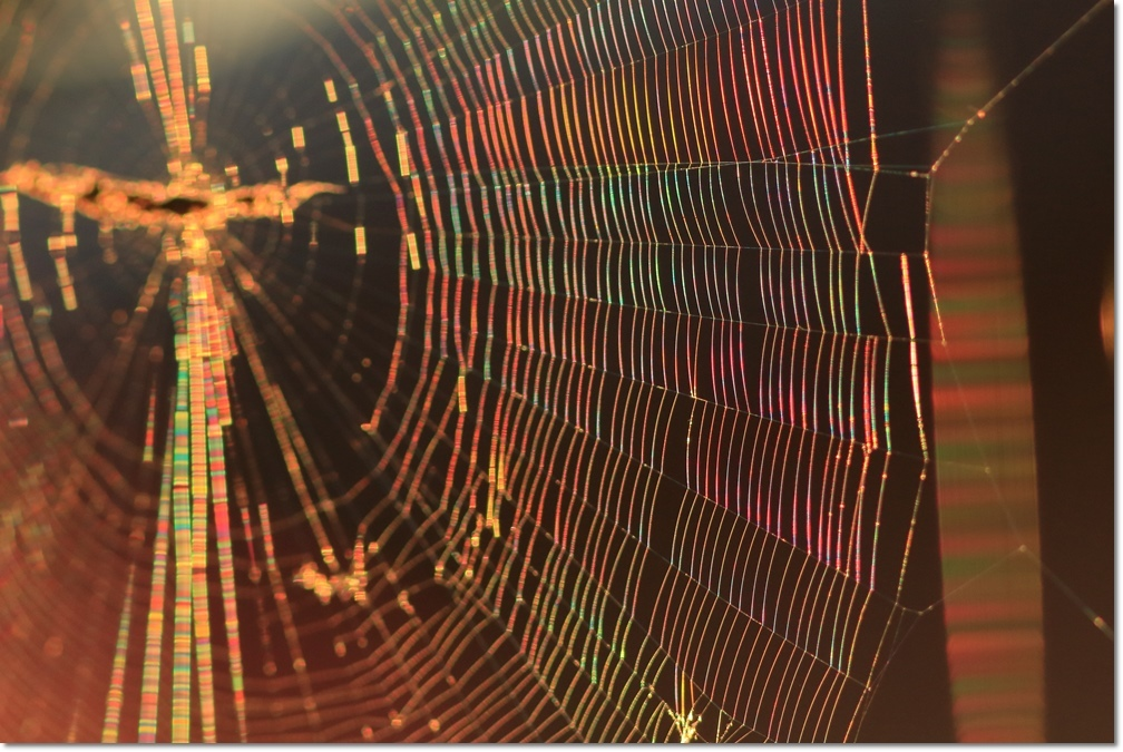 蜘蛛の糸に朝日_a0057905_14001592.jpg