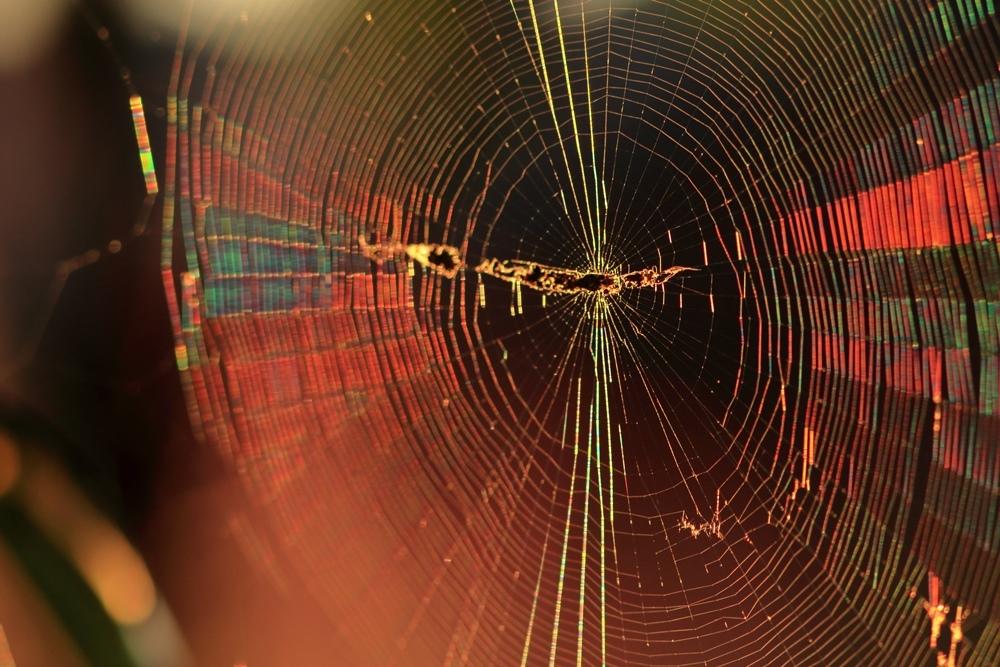 蜘蛛の糸に朝日_a0057905_14011310.jpg