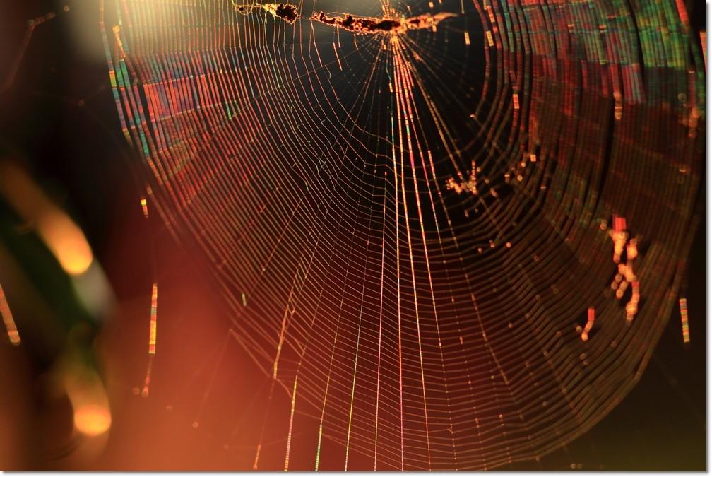 蜘蛛の糸に朝日_a0057905_14012824.jpg