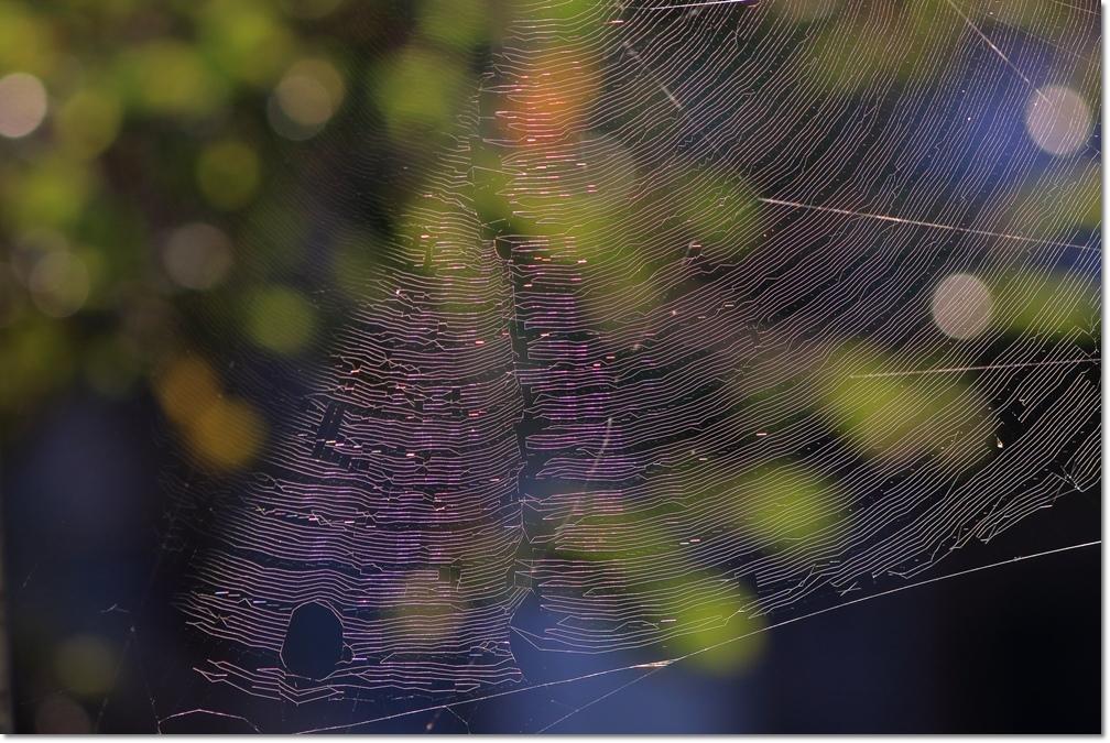 蜘蛛の糸に朝日_a0057905_14024646.jpg