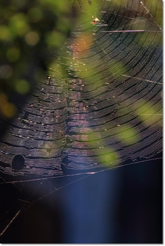 蜘蛛の糸に朝日_a0057905_14025192.jpg