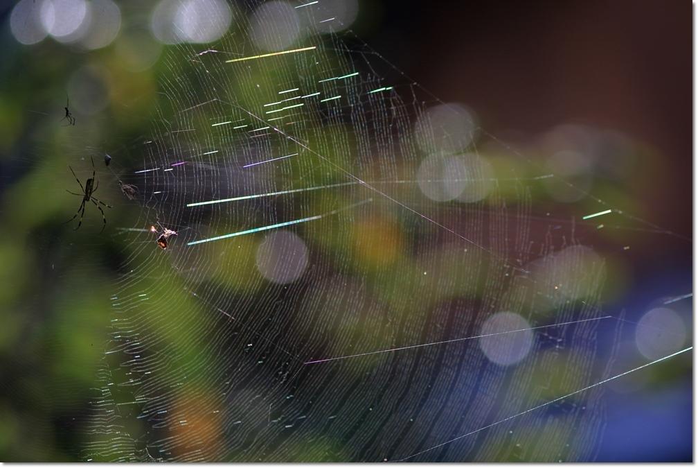 蜘蛛の糸に朝日_a0057905_14025535.jpg