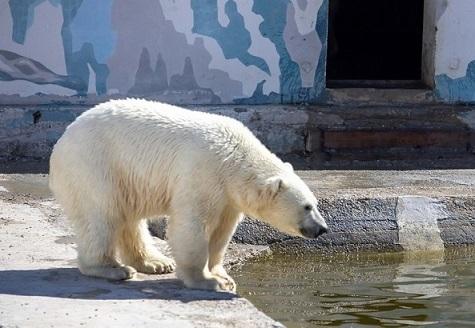 ロシア・サハ共和国、ヤクーツク動物園のアルマス(Алмаз)がハバロフスク(プリアムールスキー)動物園に向け出発 ~ 政治的決定か?_a0151913_20514203.jpg