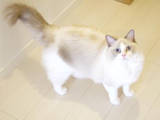 猫のお留守番 マロンちゃん編。_a0143140_21363141.jpg