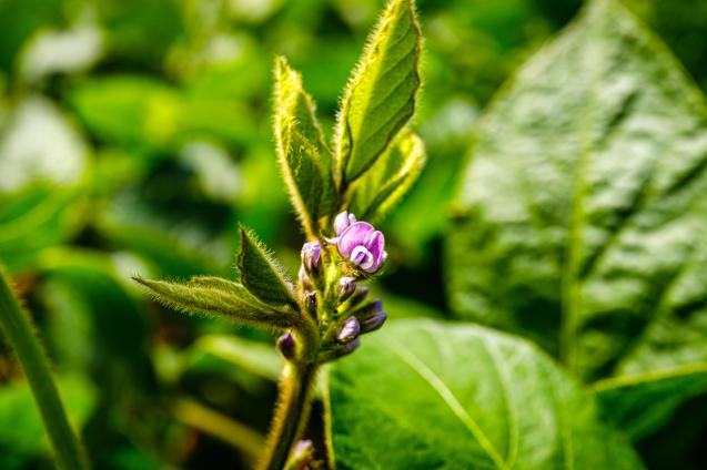 「特別展 植物 地球を支える仲間たち」公式ガイドブック_c0333248_10293217.jpg