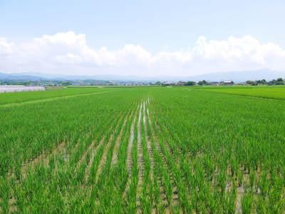 砂田米 花から頭を垂れ始めるまで!今年も順調に黄金色に色づき始めました! 令和3年度も減農薬栽培です!_a0254656_19485958.jpg
