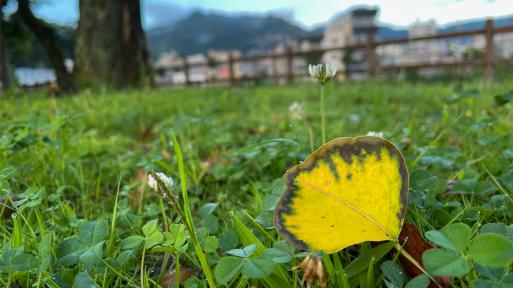 良い季節になってきた(^^♪_f0051464_08375436.jpg