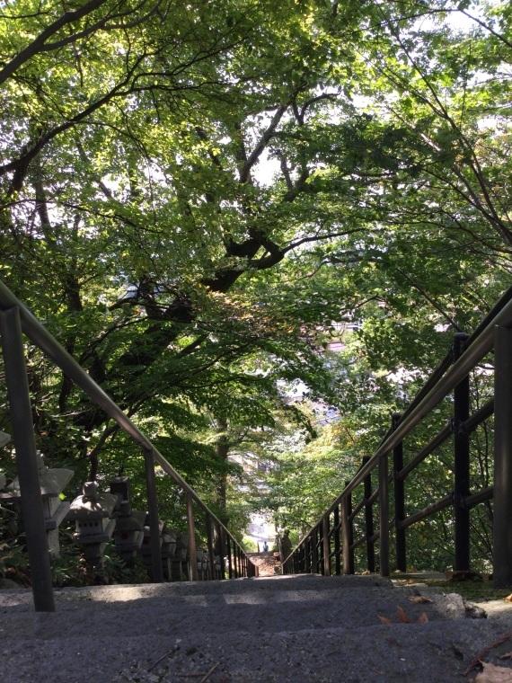 自然のトンネル_b0185375_12025540.jpeg