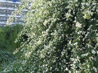 ✿秋の七草~ハギが咲きました - 今週のエコベルデ -_d0384190_17261110.jpg