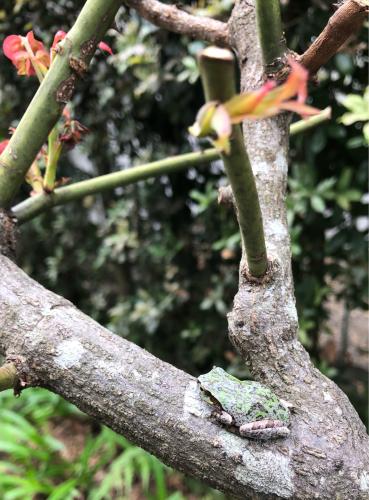 カエルと秋の庭_a0377057_08373002.jpg