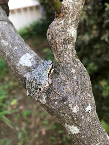カエルと秋の庭_a0377057_08394353.jpg