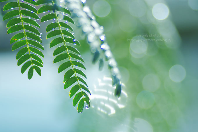 マクロde雫 -合歓の木*Ⅲ-_b0391986_00375319.jpg
