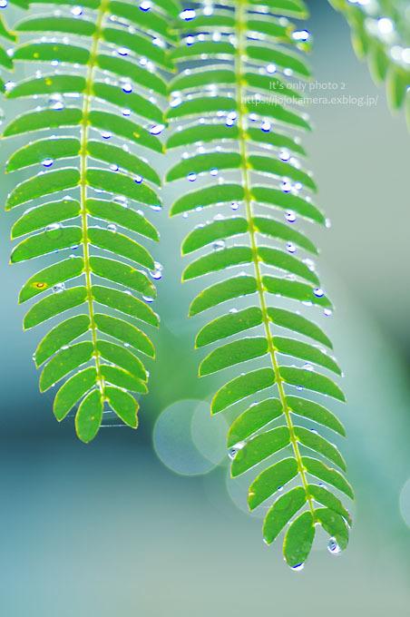 マクロde雫 -合歓の木*Ⅲ-_b0391986_00383463.jpg