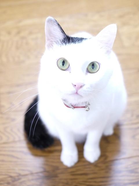 猫のお留守番 たらくん編。_a0143140_18343624.jpg