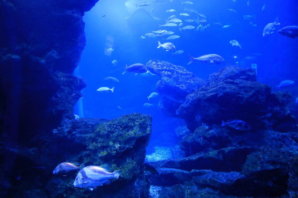 京都水族館 その4_b0325840_18242329.jpg