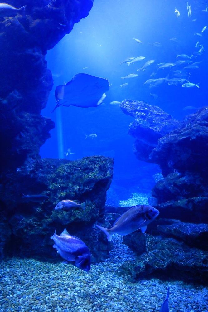 京都水族館 その4_b0325840_18245823.jpg