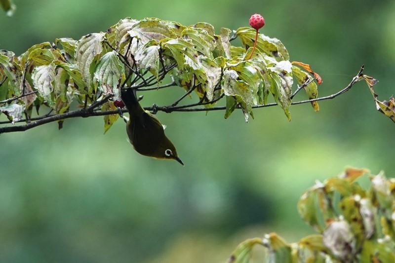 野鳥トレ 271 森林植物園_b0227552_20323502.jpg