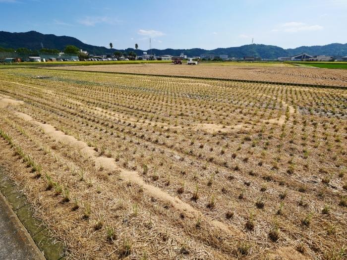 秋の田園風景  2021-09-27 00:00_b0093754_23134935.jpg