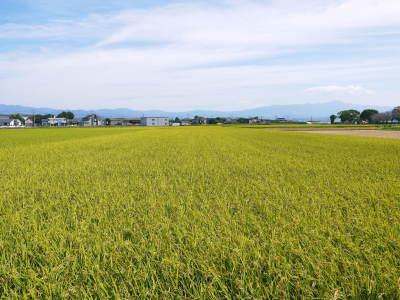 七城米 長尾農園 令和3年も美しすぎる田んぼで稲穂が頭を垂れ始めました!稲刈りは10月中旬です! _a0254656_17550409.jpg