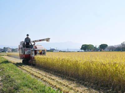 七城米 長尾農園 令和3年も美しすぎる田んぼで稲穂が頭を垂れ始めました!稲刈りは10月中旬です! _a0254656_18061727.jpg
