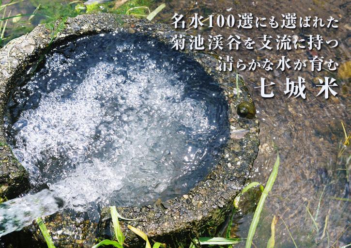 七城米 長尾農園 令和3年も美しすぎる田んぼで稲穂が頭を垂れ始めました!稲刈りは10月中旬です! _a0254656_18090584.jpg