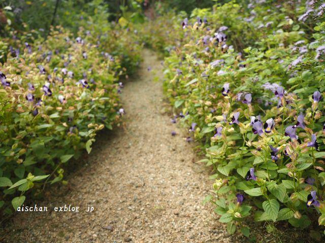 生姜蜂蜜と庭とフル―ツサンド♪_e0406439_10214991.jpg
