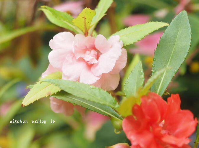 生姜蜂蜜と庭とフル―ツサンド♪_e0406439_10232688.jpg