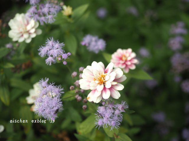 生姜蜂蜜と庭とフル―ツサンド♪_e0406439_10253512.jpg