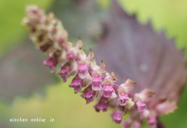 生姜蜂蜜と庭とフル―ツサンド♪_e0406439_10264931.jpg