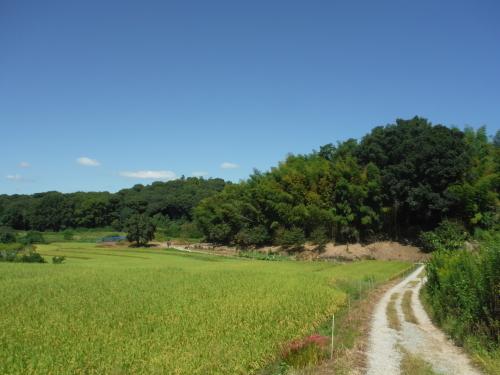 山の辺の道 のんびりポタリング (2021年9月)_b0332867_21534591.jpg
