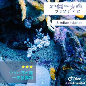 美しい水中世界【エビ】_f0144385_14402159.png