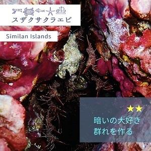 美しい水中世界【エビ】_f0144385_14402853.jpg