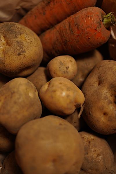 収穫の秋_b0055196_21310865.jpg