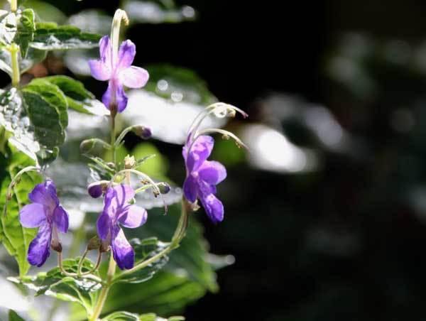 庭の花_c0404426_21062627.jpg