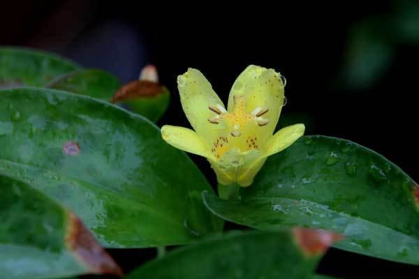 庭の花_c0404426_21132845.jpg