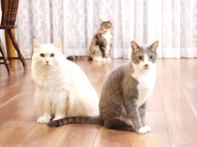 猫のお留守番 天ちゃん麦くん茶くん〇くんAoiちゃん編。_a0143140_20510267.jpg