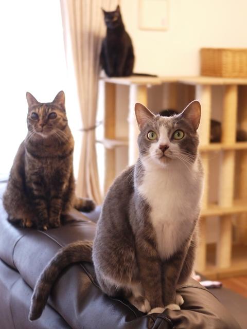 猫のお留守番 天ちゃん麦くん茶くん〇くんAoiちゃん編。_a0143140_20520430.jpg