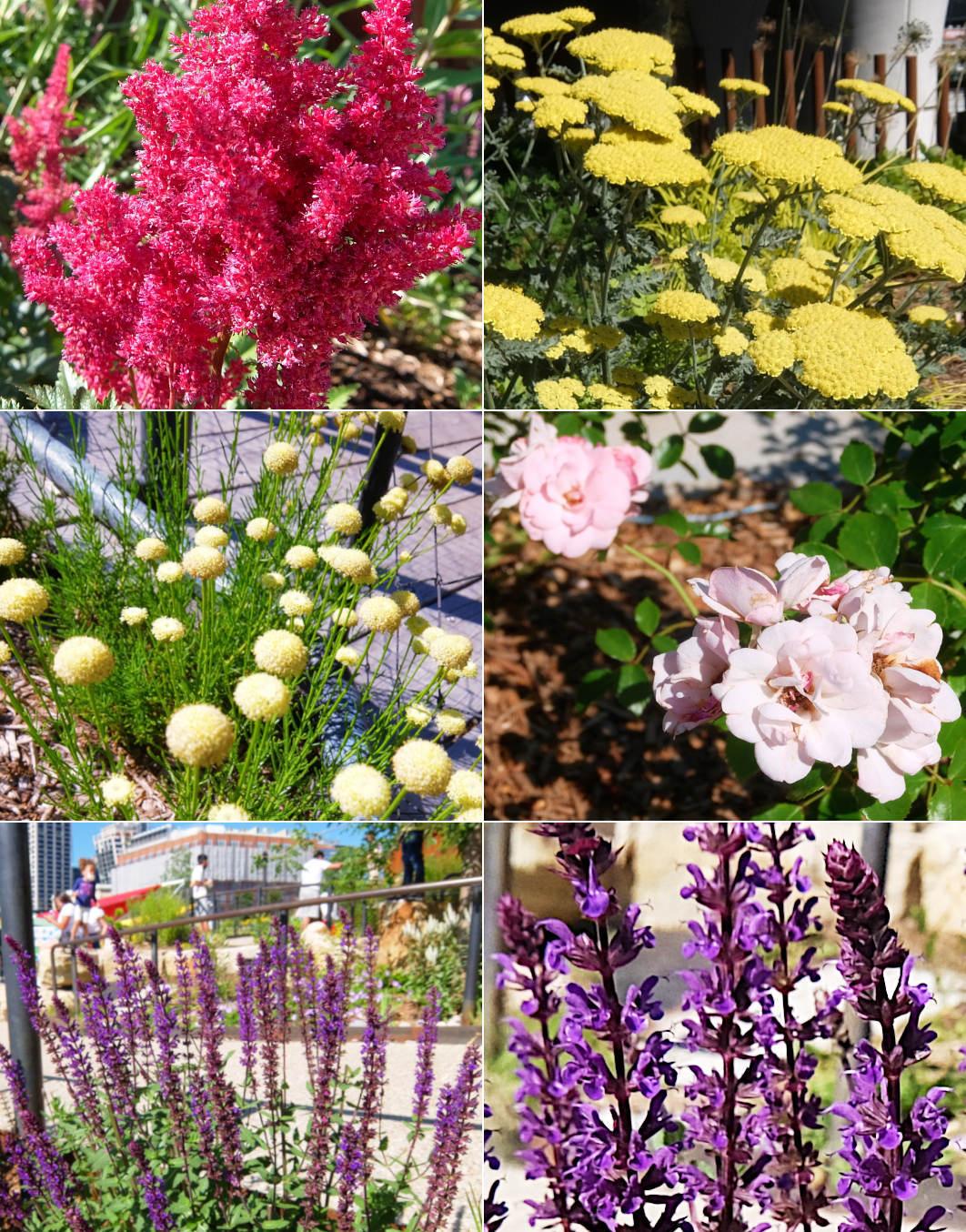 水上公園リトル・アイランドの見所、お花や植物_b0007805_03504325.jpg