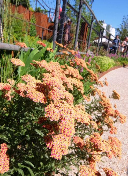 水上公園リトル・アイランドの見所、お花や植物_b0007805_03505965.jpg