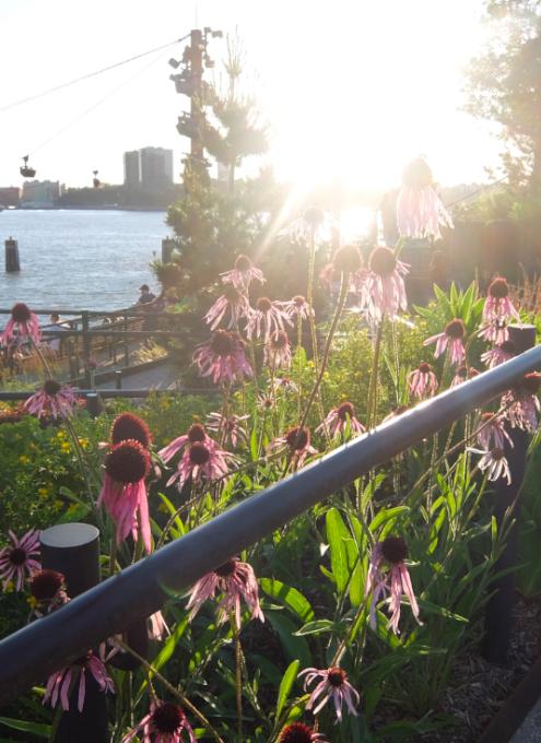 水上公園リトル・アイランドの見所、お花や植物_b0007805_03510969.jpg