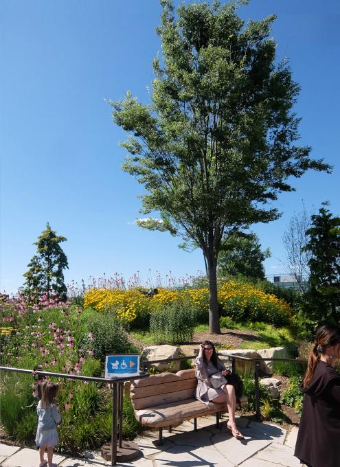 水上公園リトル・アイランドの見所、お花や植物_b0007805_03513169.jpg