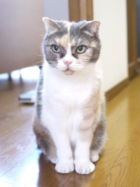 猫のお留守番 マミちゃん編。_a0143140_20153037.jpg
