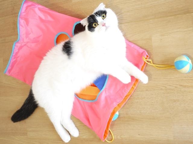 猫のお預かり ミーちゃん編。_a0143140_21541470.jpg