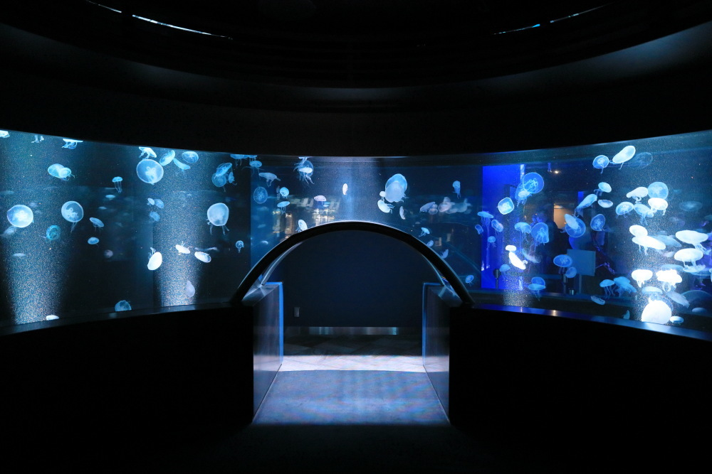 京都水族館 その5 クラゲ_b0325840_20552547.jpg