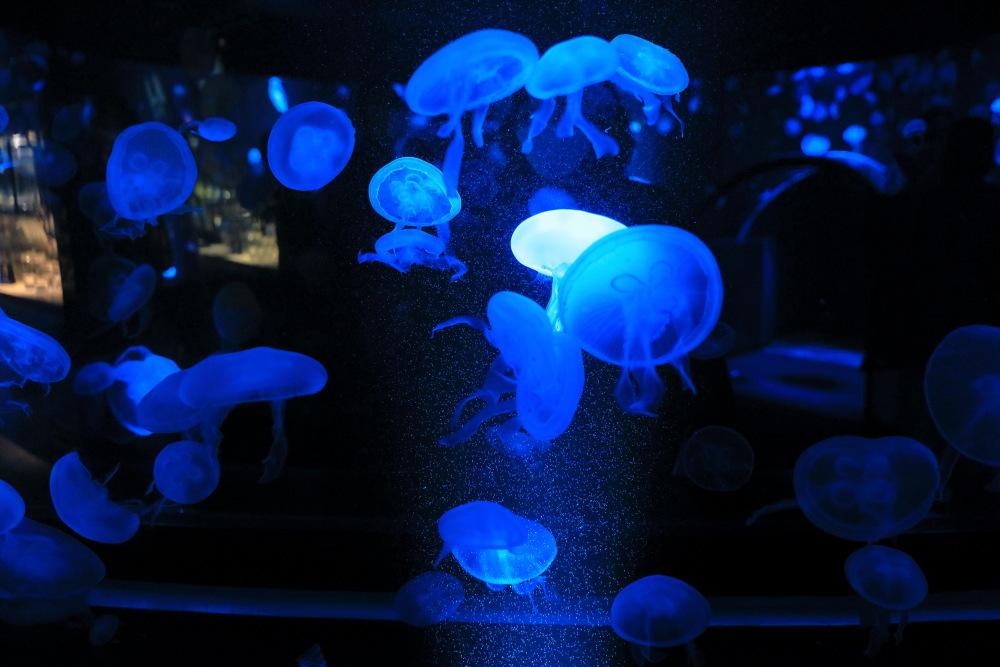 京都水族館 その5 クラゲ_b0325840_20553526.jpg